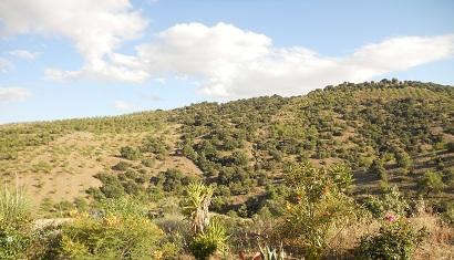 Casa Joya view